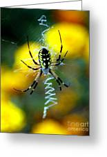 Wicked Spider Paint Greeting Card