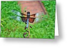 Widow Skimmer Dragonfly - Libellula Luctuosa Greeting Card