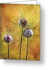 Wild Allium Ala Grunge Greeting Card