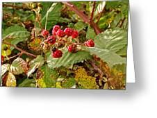Wild Berries Greeting Card by Liz Vernand