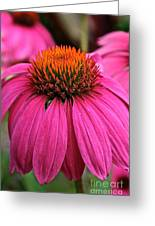 Wild Berry Purple Cone Flower Greeting Card