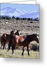 Wild Bunch Greeting Card