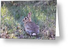 Wild Bunny Greeting Card