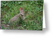 Wild Bunny Greeting Card