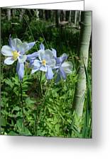 Wild Columbine In An Aspen Glade Greeting Card