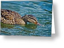 Wild Duck Greeting Card