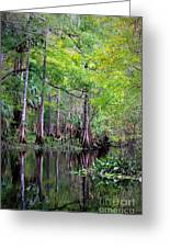 Wild Florida - Hillsborough River Greeting Card