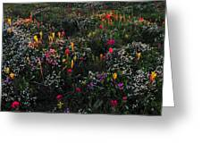 Wild Flower Field In Early Summer Greeting Card