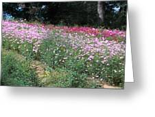 Wild Flowers Along 74 Greeting Card