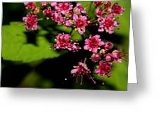 Wild Flowers Open Greeting Card