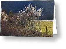 Wild Fruit Tree In The Country Greeting Card