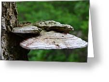 Wild Fungi Greeting Card