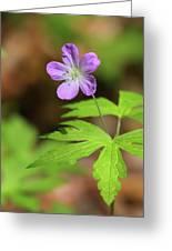 Wild Geranium Greeting Card