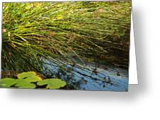 Wild Green Grass And A Blue Pond Greeting Card