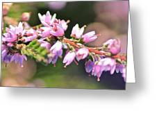 Wild Heather Greeting Card by Karen Grist