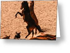 Wild Hooves Greeting Card