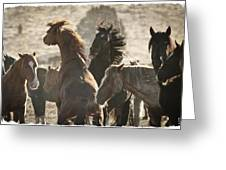 Wild Horse Battle Greeting Card