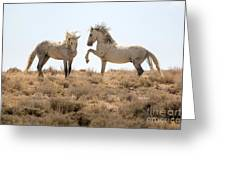 Wild Horse Disagreement  Greeting Card
