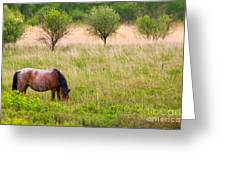 Wild Horse Grazing Greeting Card