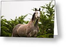 Wild Horse In The Wilderness Greeting Card