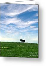 Wild Horse On Grassy Hill Greeting Card