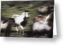 Wild Horses On The Move Greeting Card