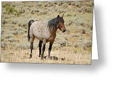 Wild Horses Wyoming - The Mare Greeting Card