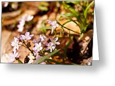 Wild Hyacinth Greeting Card