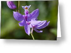 Wild Lavender Orchid Greeting Card