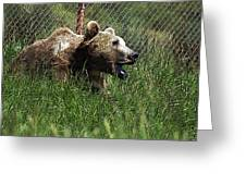 Wild Life Safari Bear Greeting Card