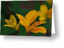 Wild Lilies Greeting Card