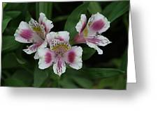 Wild Orchid Greeting Card by Sean Green