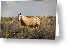 Wild Oregon Horse Greeting Card
