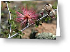 Wild Pink Fairy Duster Greeting Card
