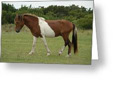 Wild Pony On Assateague Island Maryland Greeting Card