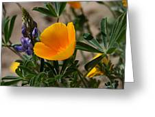 Wild Poppy And Lupine Greeting Card