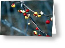 Wild Red Berries Out Of The Shell Greeting Card