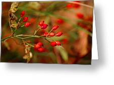 Wild Red Berry Reflections Greeting Card