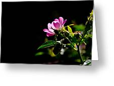 Wild Rose Along Galls Creek Greeting Card