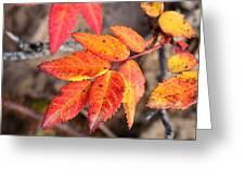Wild Rose Leaves Greeting Card