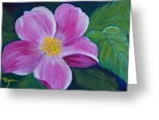 Wild Rose Study 6 Greeting Card