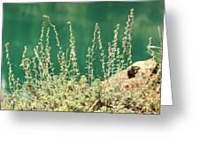 Wild Sage Greeting Card