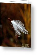 Wild Seed Greeting Card