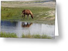 Wild Spanish Mustang Greeting Card