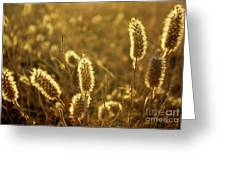 Wild Spikes Greeting Card