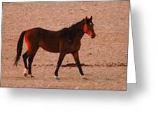 Wild Stallion Greeting Card