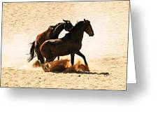 Wild Stallion Clash 3 Greeting Card