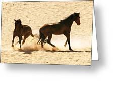 Wild Stallion Clash Greeting Card