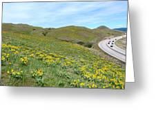 Wild Sunflowers 2 Greeting Card