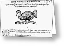 Wild Turkey, 1604 Greeting Card